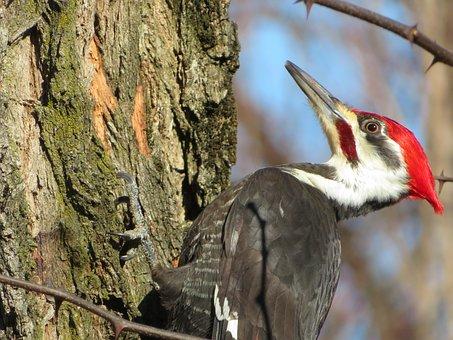 Woodpecker, Bird, Nature, Animal, Garden, Winter