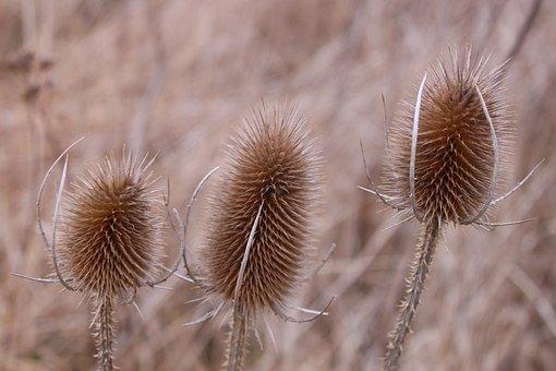 Grass, Dry, Field, Brown, Autumn, Winter