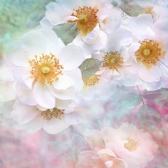 Nature, Landscape, Flower, Blossom, Bloom, Rose, Pink