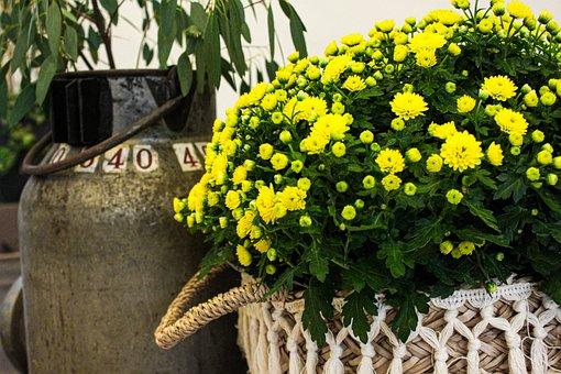 Crysantheme, Flower, Bouquet, Plant