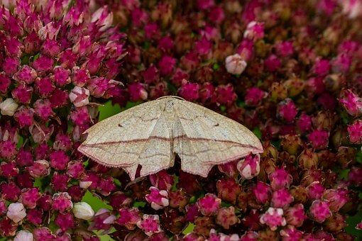 Nature, Sorrel Tensioner, Butterfly