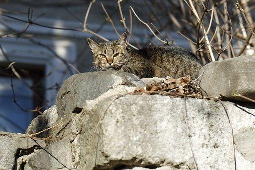 Cat, Pet, Domestic, Feline, Fur, Gray, Stripes, Seated