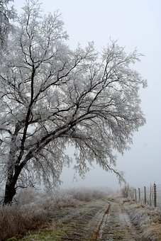 Winter, Forest, Nature, Cold, Fog