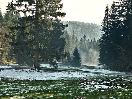 Winter, Snow, Forest, Cold, Nature, Jura