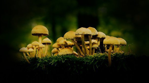 Mushrooms, Forest, Dar, Autumn, Moss, Nature, Toxic