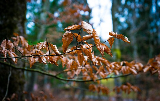 Tree, Leaf, Forest, Leaves, Autumn, Nature, Environment