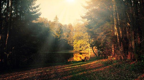 Glade, Evening Light, Light Beam, Lake