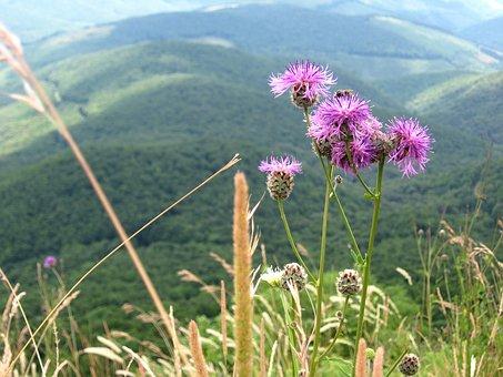 Imola, Tour, Excursion, Mountains