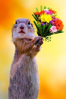 Emotions, Love, Affection, Symbol, Give, Bouquet