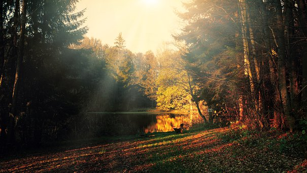 Glade, Evening Light, Light Beam, Lake, Pond, Forest
