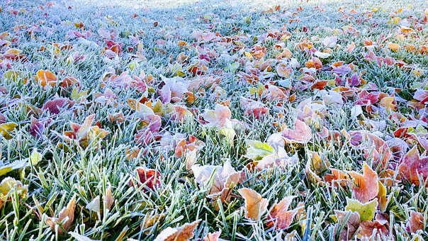 Fall, Autumn, Leaves, Color, Brilliant, Grass, Frost