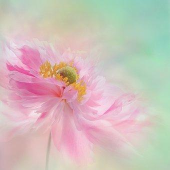 Nature, Landscape, Flower, Blossom, Bloom, Peony