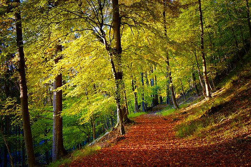 Autumn, Forest Path, Leaves, Forest