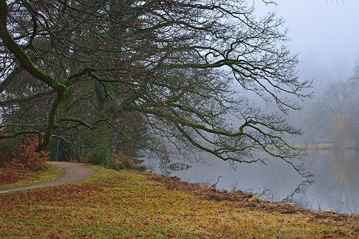 Nature, Morgenstimmung, Fog Lake