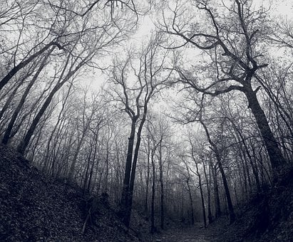 Forest, Dark, Cold, Quiet, Barren, Mystic