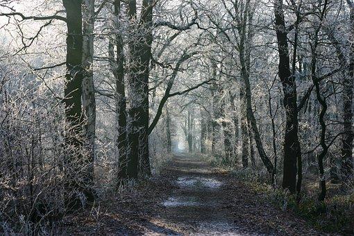 Niederrhein, Winter, Trees, Nature, Frost, Hoarfrost