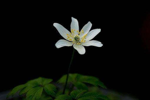 Wildflower, Nature, Spring Flowers