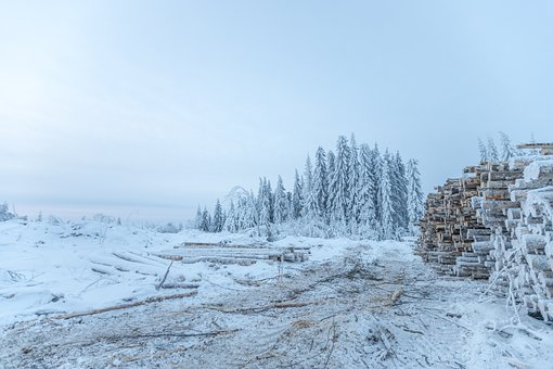 Environment, Forestry, Forest, Nature, Finland, Winter