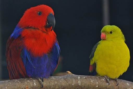 Nature, Animal World, Parakeets, Color, Close Up