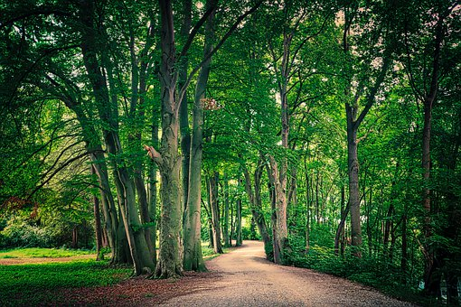 Away, Park, Trees, Forest, Nature, Path