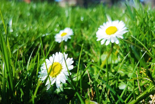 Flowers, Grass, Nature, Meadow, Plant, Spring, Summer