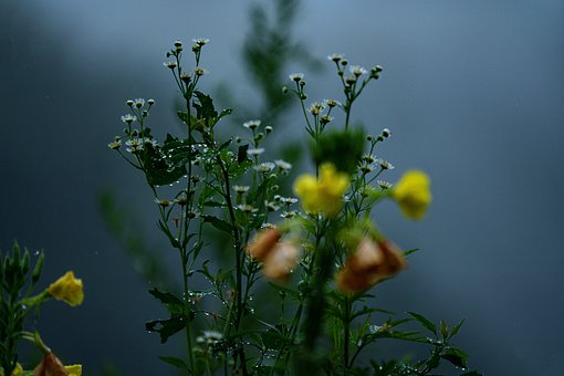 Wild Flower, Mist, Autumn, Plant, Nature