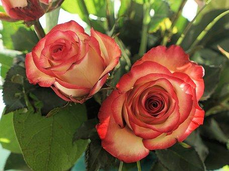 Love, Rose, Flower, Blossom, Bloom, Wedding, Romantic