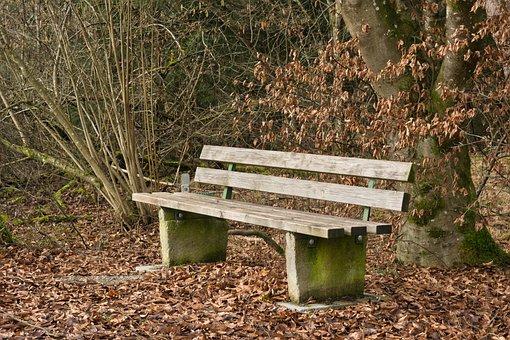 Autumn, Bench, Bank, Nature, Rest, Sit