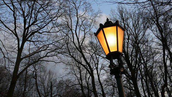 Replacement Lamp, Park, Sky, Tree, Evening, Night