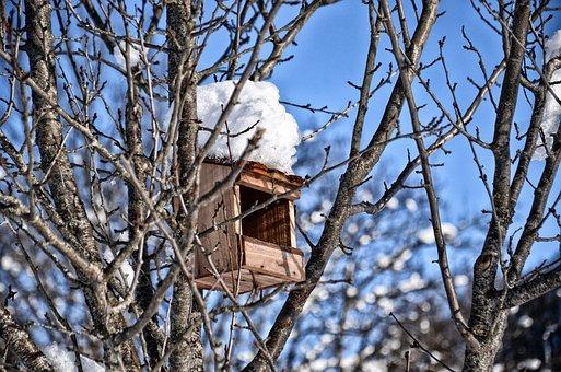Nest Box, Bird, Snow, Tree, Nest Boxes