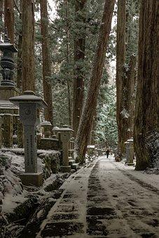 Landscape, Winter, Snow, Arboretum