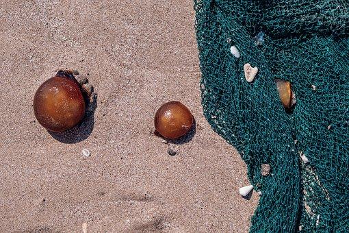 Jellyfish, Sea, Beach, Hotel, Brown Jellyfish, Holidays