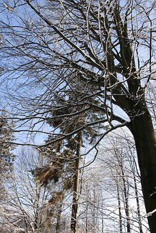 Owl, Sowia Dolina, Winter, Tree, Beeches