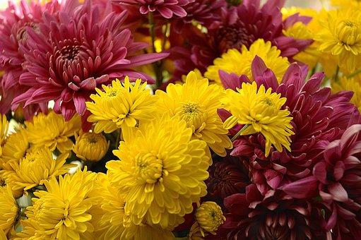 Flowers, Dahlia, Bunch, Bouquet, Orange, Arrangement