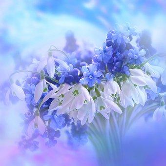 Nature, Landscape, Flowers, Blossom, Bloom, Hyacinth