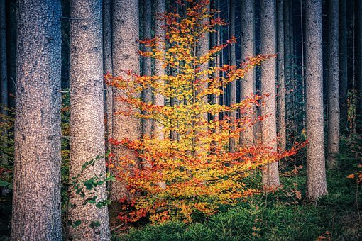Forest, Log, Fall Foliage, Leaves, Deciduous Tree