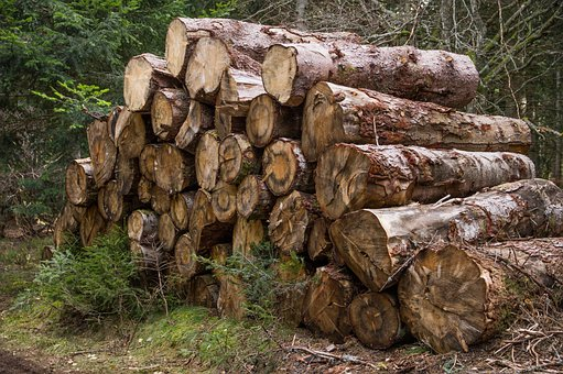 Forest, Trunks, Wood, Trees, Wood Pile