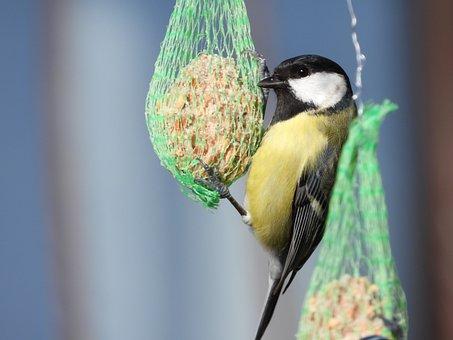 Chickadee, Winter, Bird, Garden, Feeder, Nature