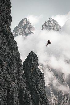 Eagle, Background, Nature, Bird, Owl, Hawk, Wildlife