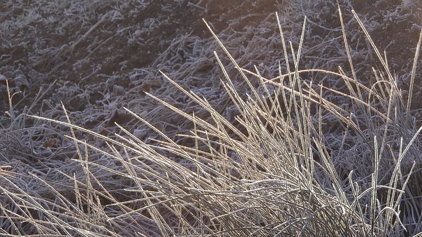 Icing, Rime, Frozen, Grass, Lawn, Frost