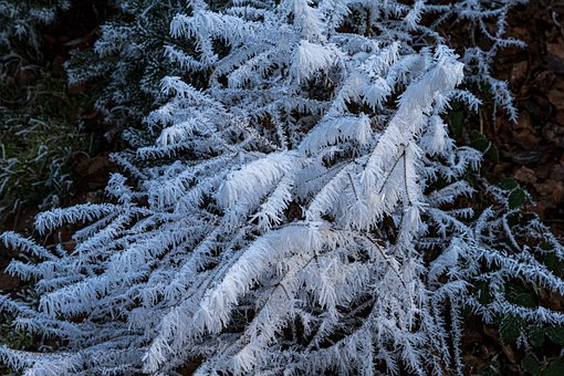 Cold, Frost, Ripe, Ice, Nature, Frozen, Hoarfrost, Icy