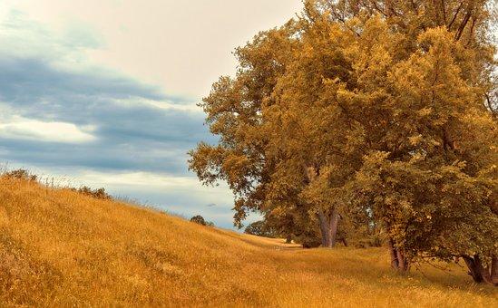 Trees, Deciduous Trees, Landscape