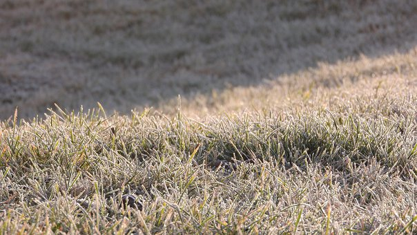Icing, Rime, Frozen, Grass, Lawn, Frost, Winter, Plants