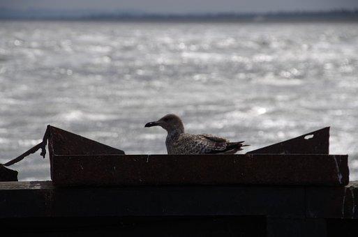 Seagull, North Sea, Port, Mole, Aalbaek