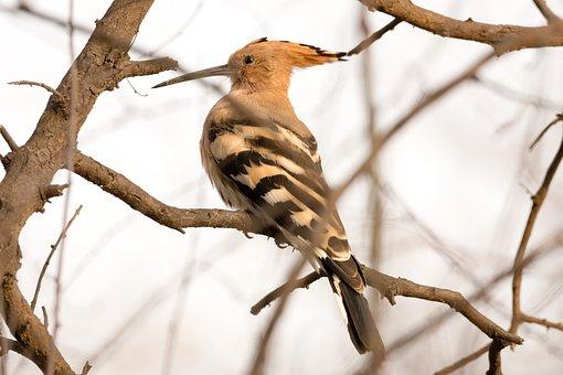 Bird, Bird Photography, Nature, Animal, Photography