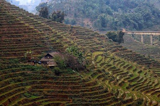Vietnam, North Vietnam, Mountains, Rice Terraces