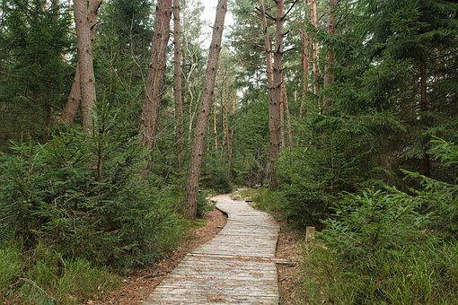 Away, Wooden Track, Planks, Nature, Wood Planks
