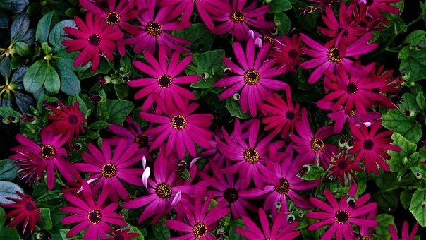 Flowers, Bloom, Pink Green, Plant