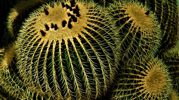 Cactus, Background, Prickly, Spur, Pointed, Green