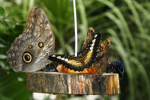 Butterfly, Food, Power Supply, Fruit, Animal, Exotic